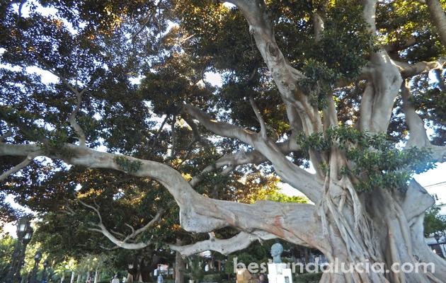 Andalucia, andalusia, spain, costa de la luz, cadiz, tree