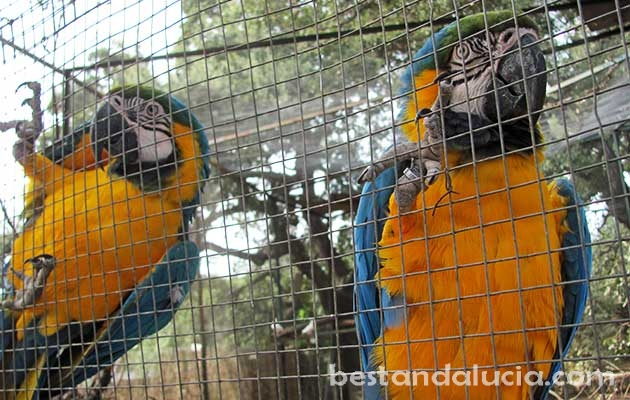 The Castellar Zoo