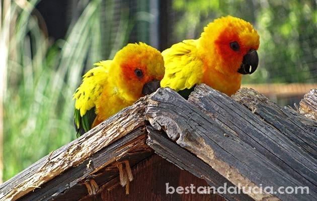 Parrots in Selwo