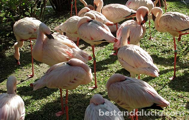Flamingos in Selwo Avenura near Estepona