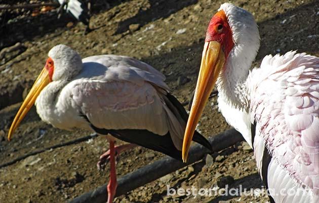 Endangered species of birds in Selwo Avenura