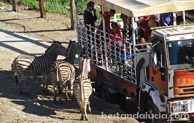 Safari in Selwo Avenura, Estepona
