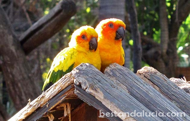 Parrots in Selwo Avenura, Estepona