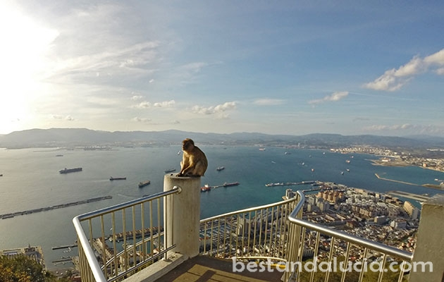 Gibraltar, uk, united kingdom, the rock, monkey, sea, mediterranean, ships, spain, andalusia, andalucia, costa del sol, Europe