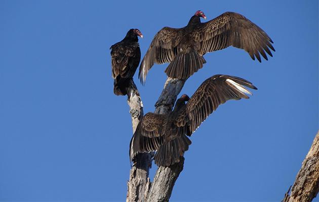 birds in Andalucia