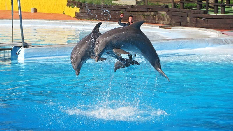 Best kids attractions in Andalucia