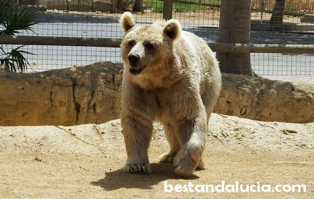 Oasys Miniholywood Zoo
