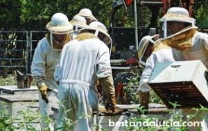 beekeepers_315x200