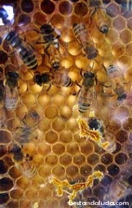 bees and honey_200x315